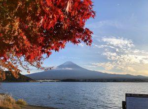 河口湖紅葉祭り始まりました!